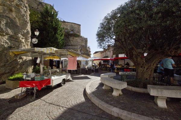 brauchen olivenbäumchen im winter wasser
